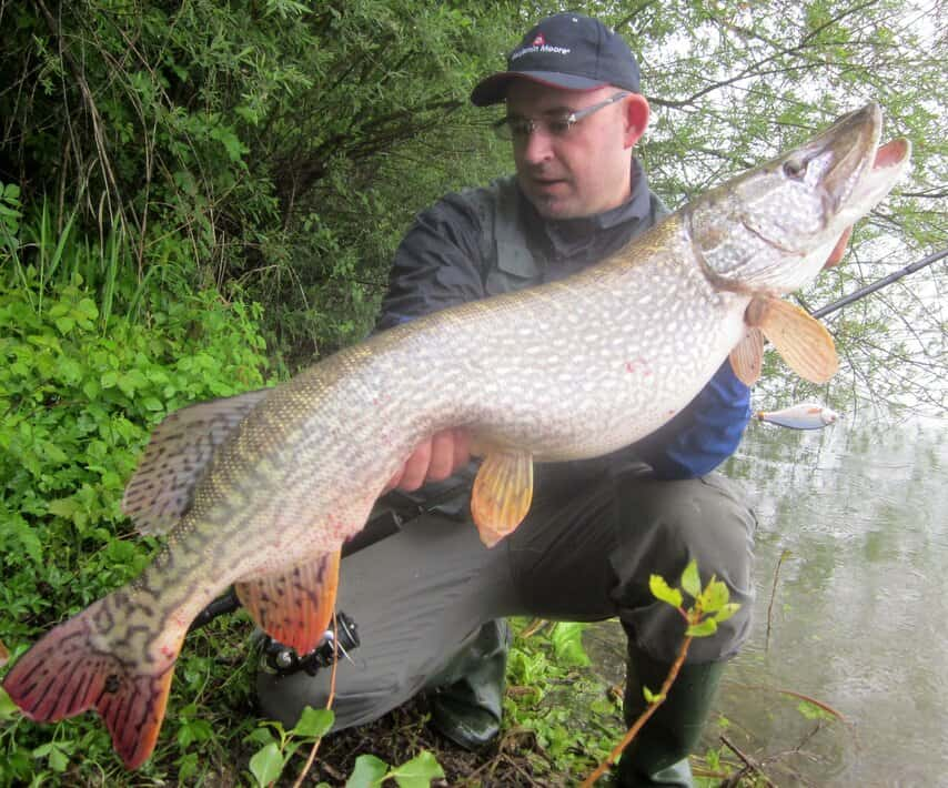 giant northern pike caught by angler