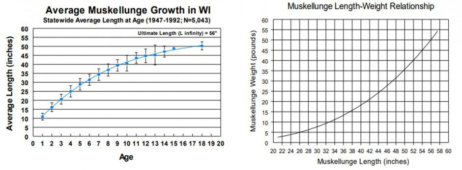Wisconsin Musky Growth Charts